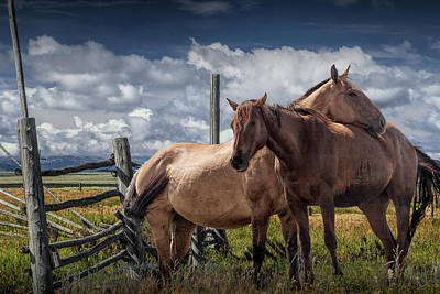 Photograph - Western Horses In The Pasture By A Wooden Fence by Randall Nyhof