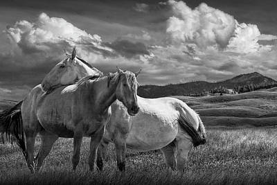 Photograph - Western Horses Under The Big Sky In Montana In Black And White by Randall Nyhof