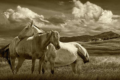 Food And Flowers Still Life - Western Horses under the Big Sky in Montana in Sepia Tone by Randall Nyhof