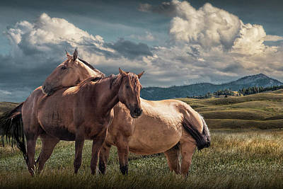 Photograph - Western Horses Under The Big Sky In Montana by Randall Nyhof