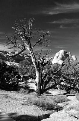 Photograph - Western Trees by Marcia Lee Jones