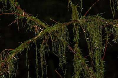 Photograph - Wet Moss by Bill Posner