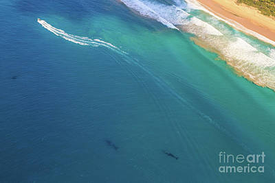 Photograph - Whale Watching Aerial by Benny Marty