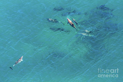 Photograph - Whales South Africa by Benny Marty