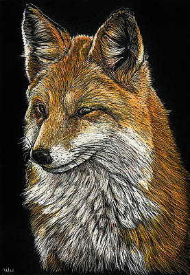 Drawing - What Does The Fox Say? by William Underwood
