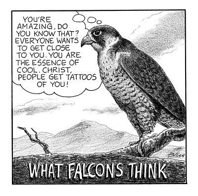 Drawing - What Falcons Think by Harry Bliss