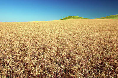 Photograph - Wheat And Mounds by Todd Klassy