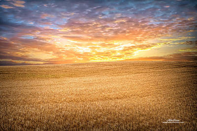 Photograph - Wheatfield Sunset by Mike Braun