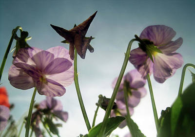 World Forgotten Rights Managed Images - Whispers of Spring Royalty-Free Image by Jaeda DeWalt