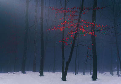Photograph - Whispers Of Winter by Mikel Martinez de Osaba