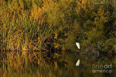 Photograph - White Bird By The River by Angelo DeVal