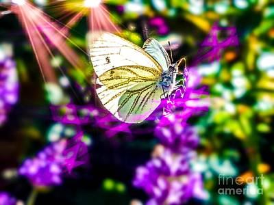 Modern Man Surf - White Butterfly by Daniel Janda