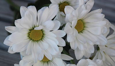 Catch Of The Day - White Daisy Bouquet 4 by Cathy Lindsey