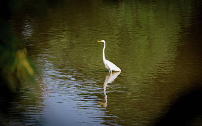 Photograph - White Egret In Water by Lora J Wilson