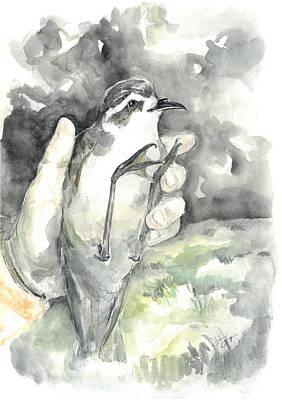 White-faced Storm-petrel Art Print