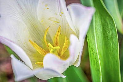 Photograph - White Flower by Miriam Bade