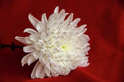 White Flower On Red-1 Art Print