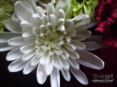 Photograph - White Flower W3 by Monica C Stovall