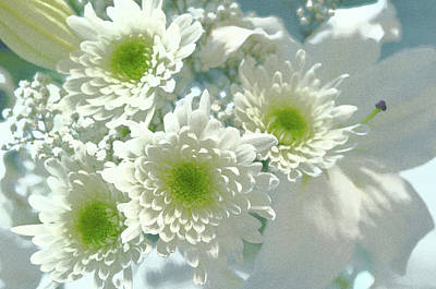 Photograph - White Flowers Elegance by Jenny Rainbow