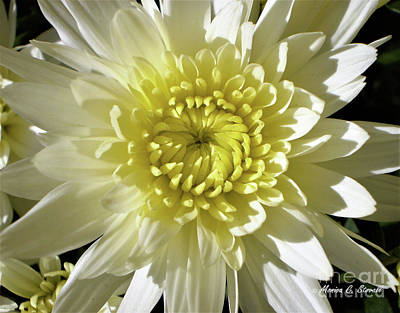 Photograph - White Flowers W1 by Monica C Stovall