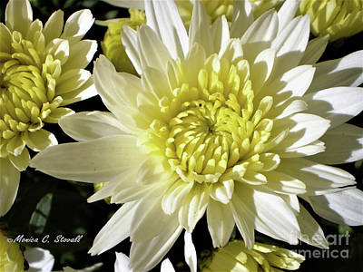 Photograph - White Flowers W8 by Monica C Stovall