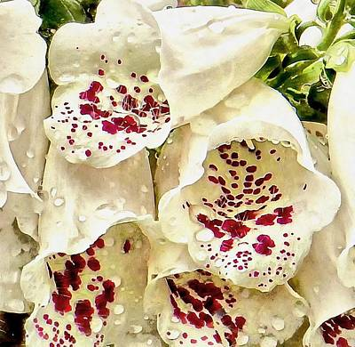 Photograph - White Foxgloves With Raindrops by Dorothy Berry-Lound