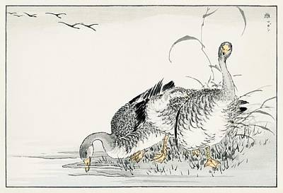 Valentines Day - White Fronted Goose illustration from Pictorial Monograph of Birds 1885 by Numata Kashu 1838-1901 by Numata Kashu