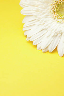 Flower Photograph - White Gerbera Daisy With Yellow by Jill Fromer