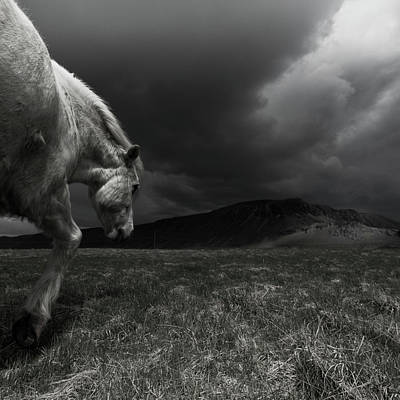 Photograph - White Horse At Night In Landscape by Johann S. Karlsson