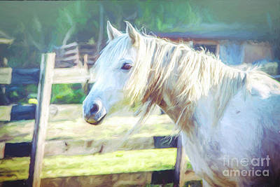 Photograph - White Horse by Eleanor Abramson