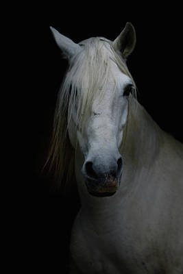 Photograph - White Horse In Shadow by Christiana Stawski
