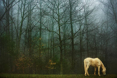 Photograph - White Horse in Winter  by SL Ernst