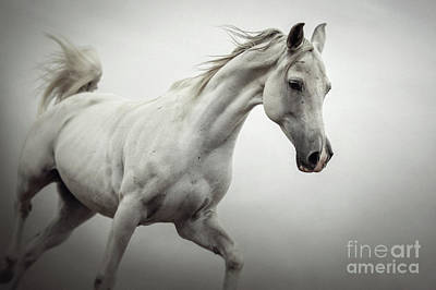 Photograph - White Horse On The White Background Equestrian Beauty by Dimitar Hristov