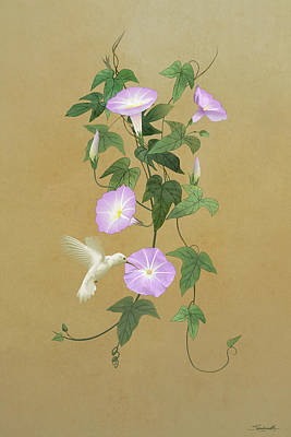 Digital Art - White Hummingbird And Morning Glory Vine by Spadecaller