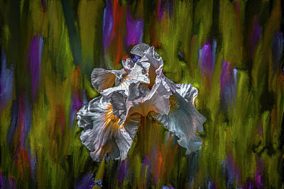 Classical Masterpiece Still Life Paintings - White iris dance #i8 by Leif Sohlman