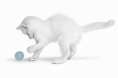 Photograph - White Kitten Playing With Ball by Gandee Vasan