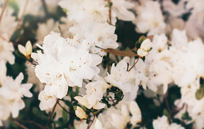 Photograph - White Mini Azaleas #floral by Andrea Anderegg