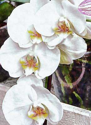 Photograph - White Orchid Cascade by Dorothy Berry-Lound