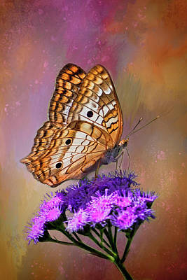 Photograph - White Peacock Butterfly by HH Photography of Florida