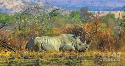 Photograph - White Rhino In Pilanesberg by Benny Marty