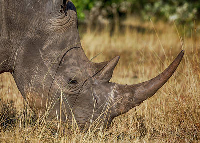 Wall Art - Photograph - White Rhino Profile by Stephen Stookey