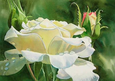 White Rose With Raindrops Original