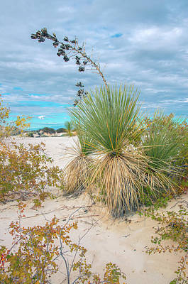 Photograph - White Sands Yucca by Adam Reinhart