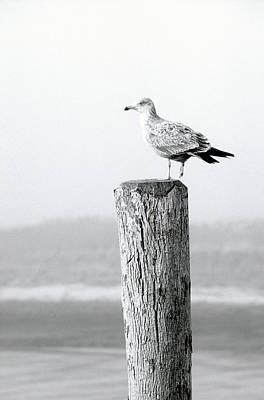 Photograph - White Seagull On Post, Cape Cod by Steven Emery