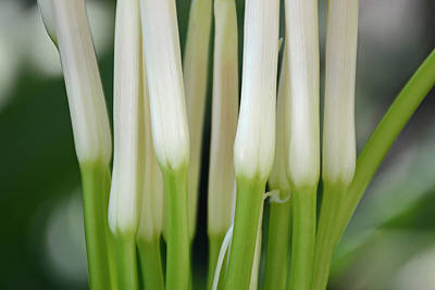 Photograph - White Stalks by Bruce Gourley