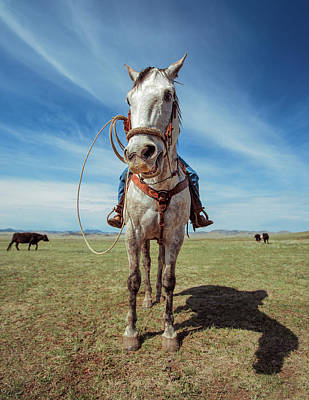 Quarter Horses Photograph - White Stallion by Todd Klassy