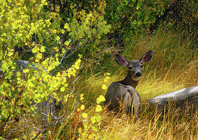 Photograph - White Tail Doe by Steph Gabler