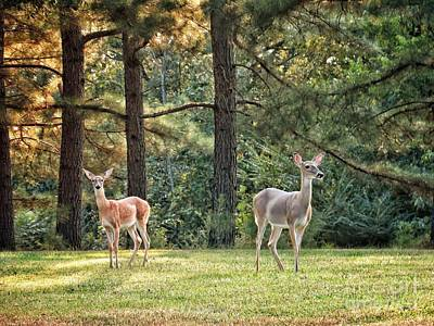 Catch Of The Day - White Tailed Deer #180 by John Myers