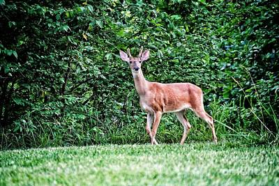 Marvelous Marble Rights Managed Images - White Tailed Deer #38 Royalty-Free Image by John Myers