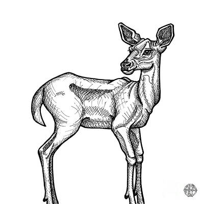 Drawing - White Tailed Doe by Amy E Fraser